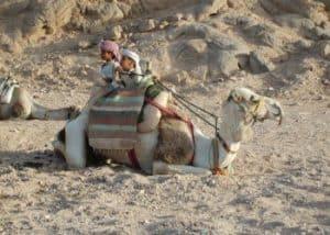 Tui Egypt Holidays